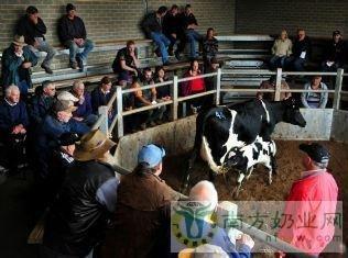 澳大利亚优质奶牛需求强劲