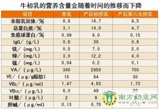 不宜将牛初乳作为婴儿主食